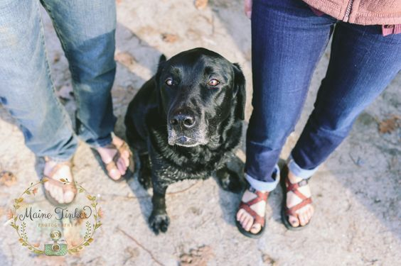 ways to involve your dog in your engagement pictures.