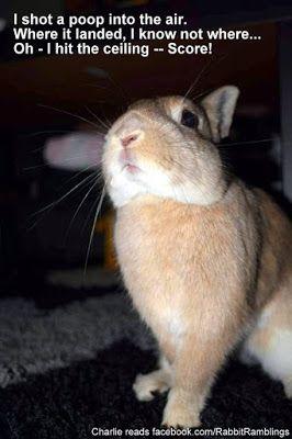 Funny Bunny Memes Fiorella Coelho