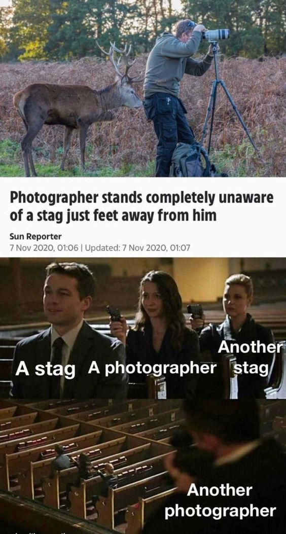 """What The Crap Is A """"stag"""""""