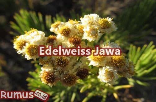 Terbaru 12 Gambar Bunga Di Indonesia Beserta Namanya Nama Latin Tumbuhan Gambar Lengkap 100 Macam Tumbuhan 51 Nama Nama Bunga Di 2020 Bunga Tanaman Hias Daun Gambar