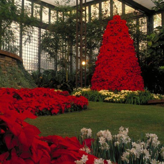 Beautiful Christmas Garden