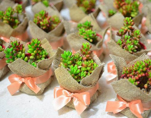 Wedding Giveaways Ideas In Philippines : ... souvenirs philippines wedding favors succulents favors plants wedding