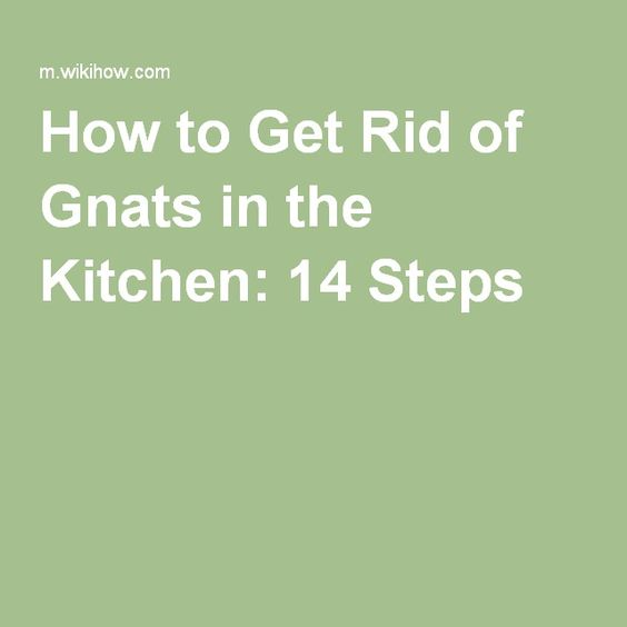 get rid of gnats in the kitchen how to get rid the o 39 jays and how to get. Black Bedroom Furniture Sets. Home Design Ideas