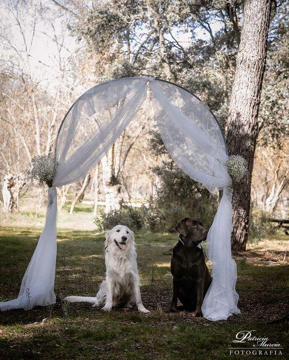 Una boda perruna (Por Patricia Murcia y Premier Bodas)