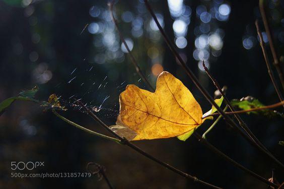A leaf (2)..... by godwithme