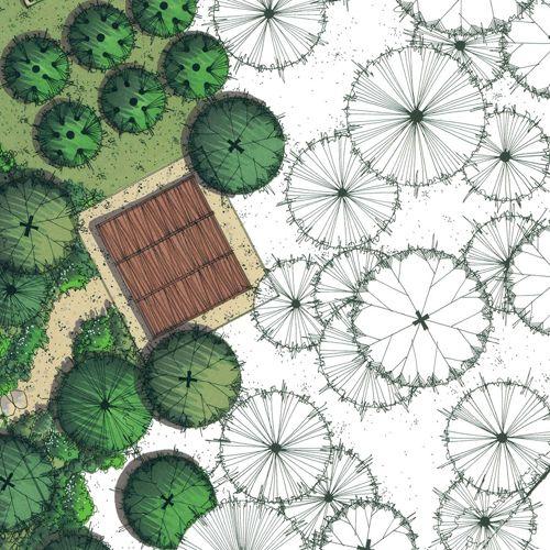 Croqui - vegetação