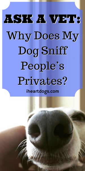 Why do dogs sniff people?
