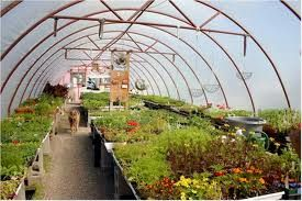 نکات مورد توجه در زمان احداث گلخانه