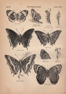 Free Old Butterfly Clip Art - The Graphics Fairy
