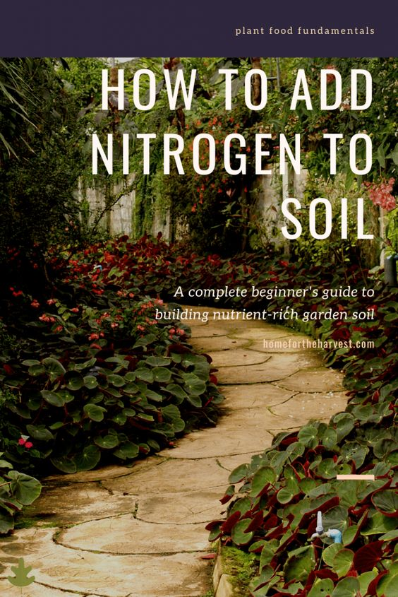 How to Add Nitrogen to Soil - Home for the Harvest