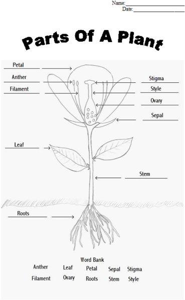 Printables Flower Parts Worksheet parts of a plant worksheet biology pinterest agriculture worksheet