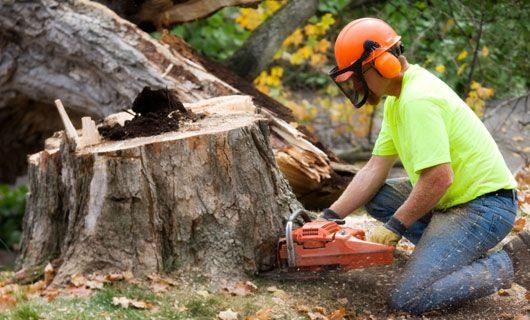 Stump Removal Can Make Your Yard More Enjoyable In 2020 Tree Removal Service Tree Removal Tree Care