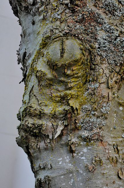 Tree face by ngawangchodron, via Flickr