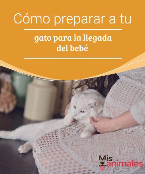 Cómo Preparar A Tu Gato Para La Llegada Del Bebé Llegada De Bebe Gatos Bebe