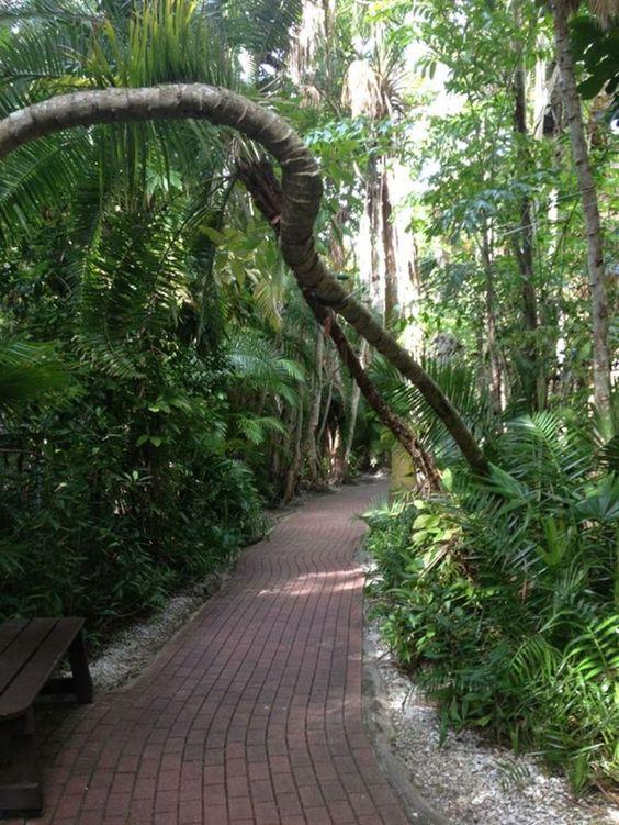 Sarasota Jungle Gardens Sarasota Fl Florida Pinterest Gardens Jungle Gardens And Jungles
