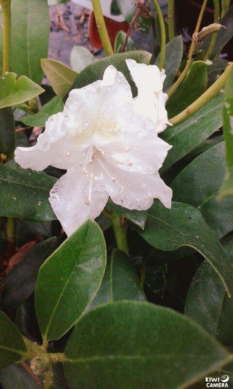 Single beautiful flower  ♥¡