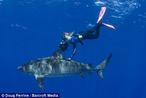 Swimming just inches from one of nature's most dangerous animals, Stefanie Brendl is the real star in this shark tale