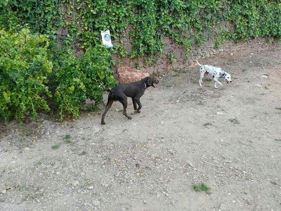 Juegos en el parque canino  05/16  Yago , Dama