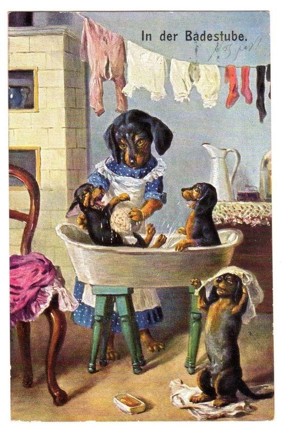 POSTCARD DOGS DACHSHUNDS IN THE BATHTUB THIELE OR SIMILAR