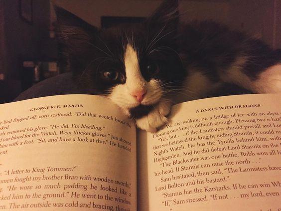 Birkaç gün önce bu yavru kediyi evlat edindim.  O benim ilk yavru kedim.  Bana bakarken o suratla okumanın imkansız olacağını asla öngörmedim!