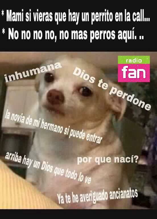 Perrito Memes Graciosos Memes Espanol Graciosos Memes