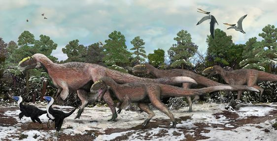 The Yutyrannus, described in 2012, are the largest known dinosaurs with feathers—a patch of fossilized skin shows shaggy body feathers, similar to an emu. Yutyrannus was related to T. rex and measured 30 feet long and weighed more than 3,000 pounds. Illustration by Brian Choo.