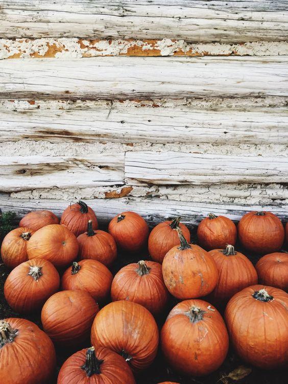 """triflingthing: """" Pumpkinszn 🍁 """""""