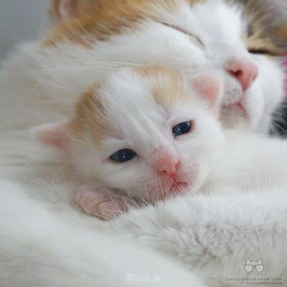 صور قطط باقة مختارة من أروع و أجمل القطط مع خلفيات Hd Cute Animals Baby Cats Baby Animals