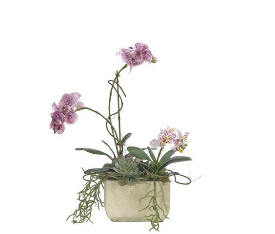 Phalaenopsis Succulent, Slate Planter, 17wx12dx22h PF172