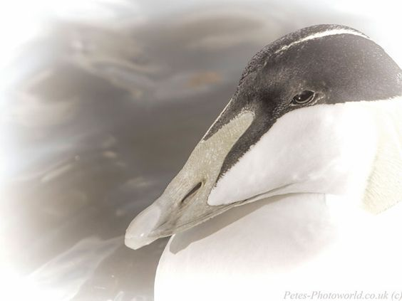 Slimbridge Wetland Centre - http://www.petes-photoworld.co.uk/2015/03/29/slimbridge-wetland-centre/