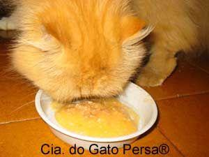 - Cenoura - Mandioca - Peito de Frango
