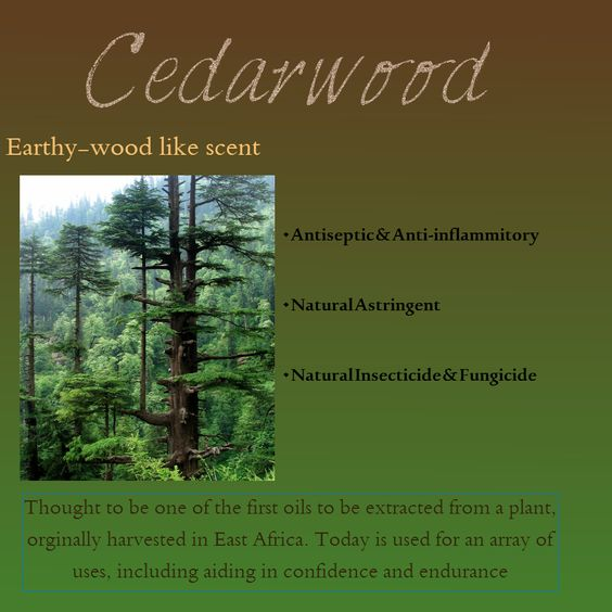 Get to know the ingredients.  Cedarwood Essential Oil  To purchase All Natural Soaps and Lip Balms visit www.SarahFairs.etsy.com  For more information on other ingredients and to keep updated go to www.Facebook.com/SarahFairsEtsy