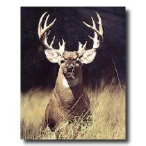 Trophy Buck Deer With Big Rack Wall Picture Art Print //  Description A high-quality home decor wall picture which represents the best of both worlds: quality and affordability. //   Details   Sales Rank: #33502 in Home  Brand: Art Prints Inc Model: ag1818u  Features  Brand new 16x20 inch art print Printed on high quality lithograph art paper Printing process produces a vivid and detailed picture// read more >>> http://Paxton265.iigogogo.tk/detail3.php?a=B003ZKGZ9W