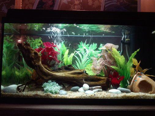 Photo caption my first tropical tank description jewel for Fish tank ice method