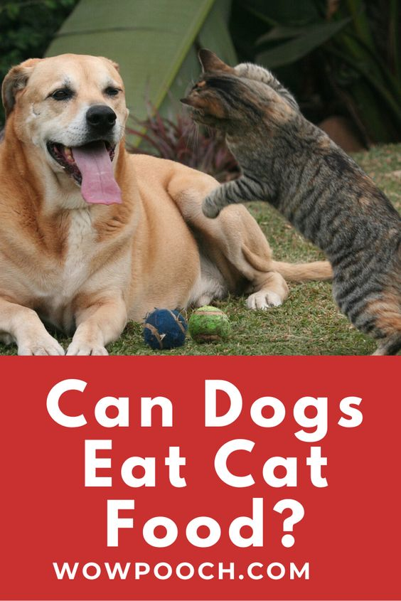 Can Dogs Eat Cat Food Wowpooch Foods Bad For Dogs Cat Food Can Dogs Eat