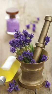 """~In the lavender field~  """"Lavender sprays, incense, & lotions provide aromatherapy advantages for sleeplessness and anxiety...The smell is delightful!:"""