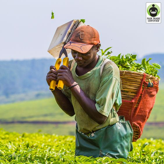 Remember: Behind every cup of #tea, there is a person. Will you treat them fairly? #FairTrade