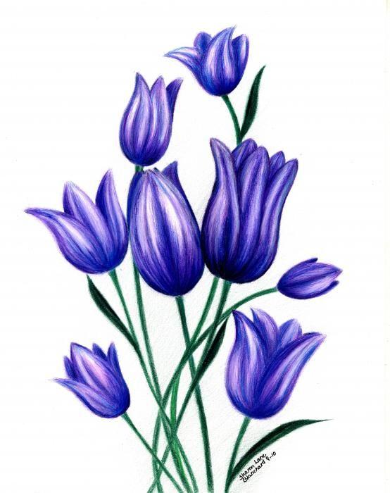 Tulip Flower Drawing Google Search Adesivos De Unhas Impressos Tulipas Pelicula De Unha