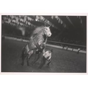 Fort Worth Stock Show, Garry Winogrand, n.d., Dallas Museum of Art