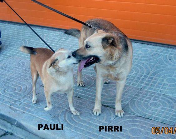 Pirri und Pauli - die unzertrennlichen Freunde... und solche Freunde trennt man nicht...