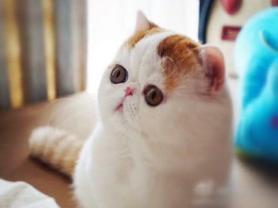 снупи котики фото