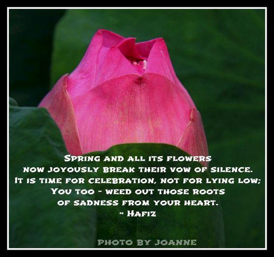 Spring Flower Poems Quotes: Hafiz: Spring Flowers