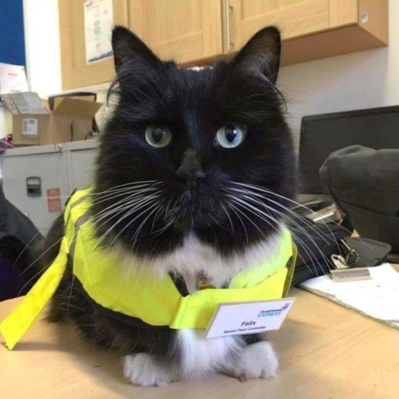 este-gato-es-el-nuevo-agente-de-control-de-plagas-de-una-estacion-de-tren-11