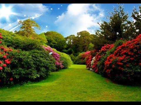 Beautiful Natural Flower Garden Background Video Allbackgroundvideo Youtube Beautiful Flowers Garden Garden Pictures Flower Garden Pictures Flower garden background hd images
