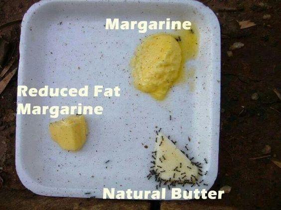 Real food vs.