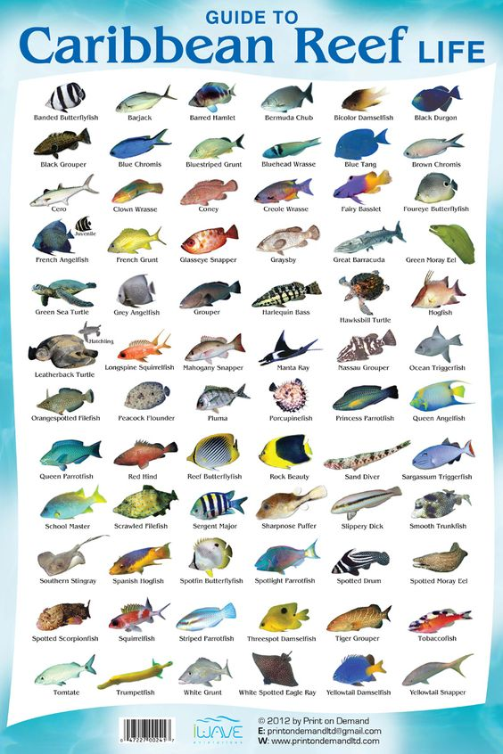 this is a coral reef fish species chart so you know what