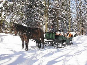 Pferdeschlittenfahrten in Lackenhof-Gaming-Langau