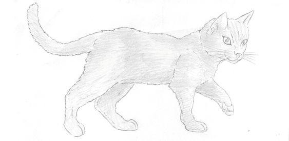 Dessiner un chat dessins pinterest google recherche - Dessiner une chatte ...