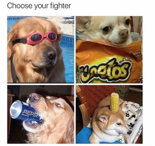 I Choose The Dog With De Corn Dank Dog Dogs Meme Memes Momo Momos Animal Memes Funny Animal Memes Dog Memes