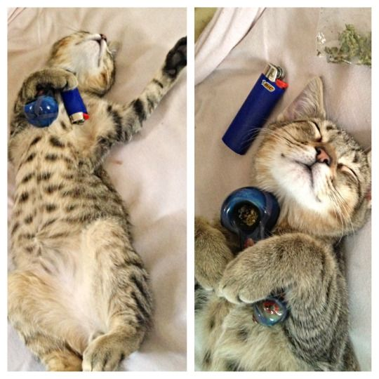 When you can't wait to wake n bake.  #cannabis #kitty #weed